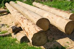 Peeled thick logs in the log house construction yard Royalty Free Stock Image