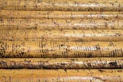Peeled wet tree trunks Stock Image