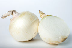 Peeled white onion  on white background with shadow Royalty Free Stock Photos