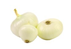 Peeled white onions. Stock Images