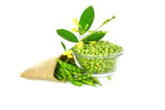 Peeled and whole Pigeon peas royalty free stock images