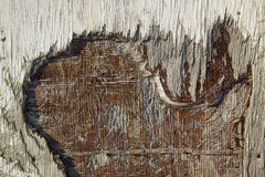 Peeled wood texture Stock Image