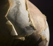 Peeling. Abstract image of varnish peeling off gourd. Sense of age and decay Stock Images