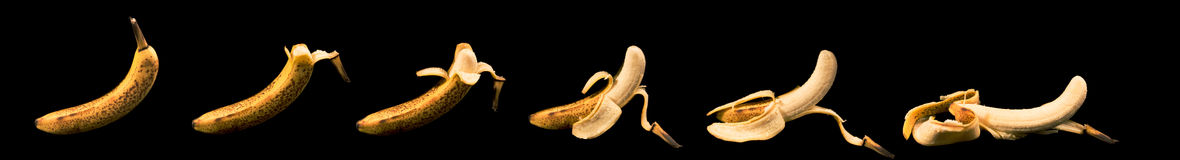 Peeling Banana Sequence. A sequence of a banana peeling by itself, isolated on black stock image