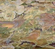 Peeling bark detail Royalty Free Stock Photos