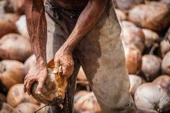 Peeling Coconut Royalty Free Stock Image