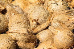 Peeling coconuts Royalty Free Stock Images