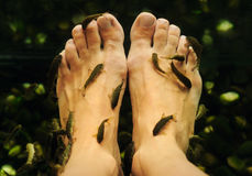 Peeling feet fish. Stock Image