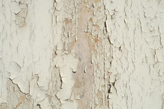 Peeling paint faded color rough wood texture Stock Images