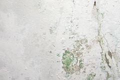 Peeling paint and moss on old concrete wall Royalty Free Stock Photography