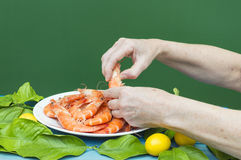 Peeling prawns with hands. Plate with prawns, peeling prawns with hands Royalty Free Stock Photos