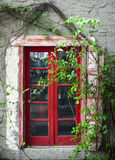 Peeling Red Door & Green Vines Stock Photo