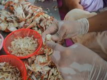 Peeling shell boiled crab by man in factory stock photo