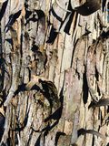 Peeling Tree Bark Stock Photos