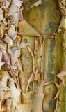 Peeling tree bark showing a rough texture Stock Photos