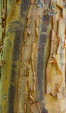 Peeling tree bark showing  rough texture Stock Photo