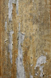 Peeling Varnish Royalty Free Stock Images