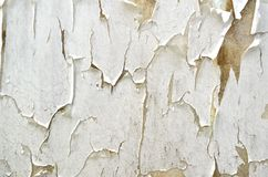 Peeling wall Royalty Free Stock Photos