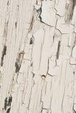 Peeling white paint. White paint peeling and cracking on wood background texture Stock Image