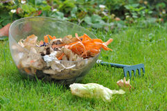 Peelings for compost. Vegetable peelings in a container on the grass Royalty Free Stock Image