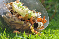 Peelings for compost. Vegetable peelings in a container on the grass Stock Images