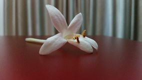 Peep Flower Stock Photo