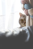 Peeping Cat Stock Photography