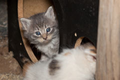 Peeping Kitten Stock Photos