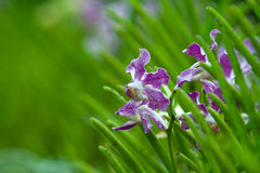 Peeping Orchids. Orchid plants and plowers in a park Stock Photo