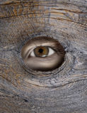 Peeping Tom. Person's eye looking through a hole in wood Stock Photo
