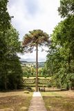 Peer het hangen van de boom stock fotografie