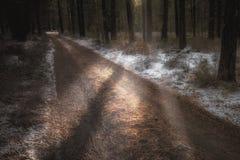 Peering de Winterlicht Stock Fotografie