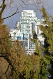 City Winter Foliage and Buildings. Peering through drab winter foliage to a cluster of city buildings Stock Photo