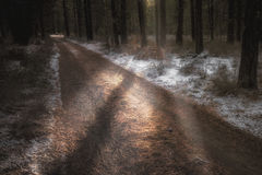 Peering Winter Light stock photography