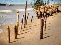 Pega el bastón pegado en las filas en la arena en la orilla del lago Fotografía de archivo