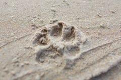 Pegada animal nas grões de areia, fim acima Fotos de Stock