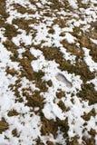 Pegada de um ser humano na neve nas montanhas após o inverno na mola imagem de stock royalty free