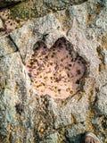A pegada rara do dinossauro do tracksite sauropod-dominado do nam Brathairean de Rubha, irmãos aponta - a ilha de Skye fotos de stock