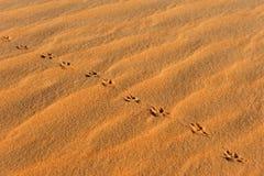 Pegadas animais na areia imagem de stock