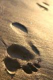 Pegadas da praia Imagem de Stock Royalty Free