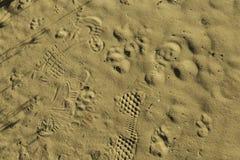 Pegadas da textura na areia Foto de Stock