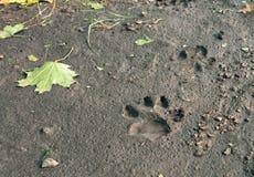Pegadas do cão na terra após a chuva fotos de stock royalty free