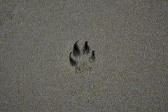 Pegadas do c?o na areia imagem de stock
