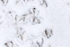 Pegadas do ganso na neve como um fundo Imagem de Stock Royalty Free