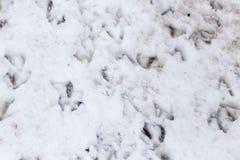 Pegadas do ganso na neve como um fundo Fotografia de Stock Royalty Free