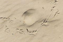 Pegadas do pássaro na areia Fotos de Stock Royalty Free