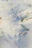 Pegadas dos pássaros na neve Fotos de Stock Royalty Free