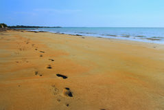 Pegadas e pawprints na praia Imagem de Stock