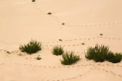 Pegadas em um deserto Fotos de Stock Royalty Free