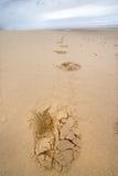 Pegadas em uma praia selvagem Imagens de Stock Royalty Free